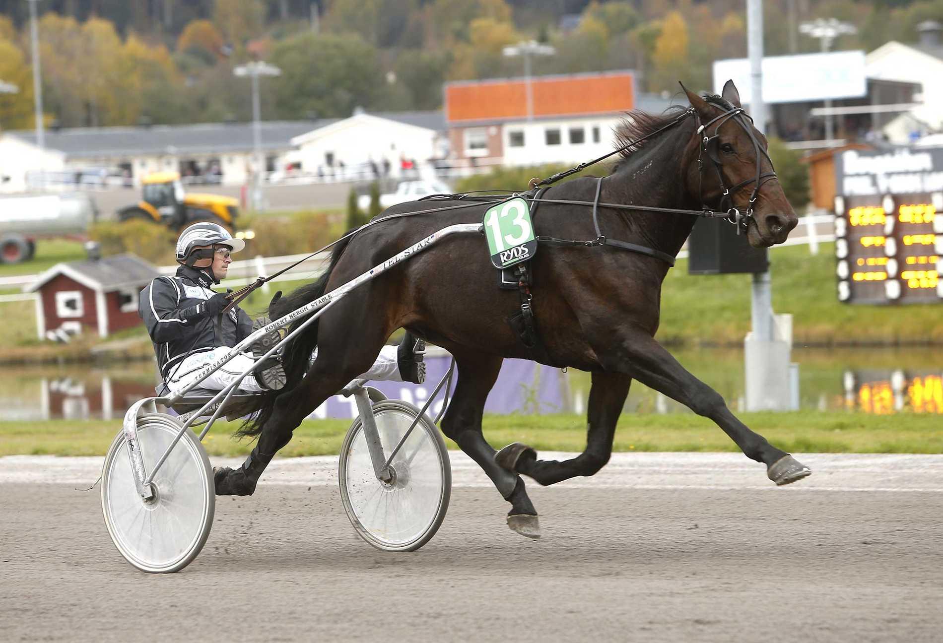 Robert Bergh med hästen Le Mat.