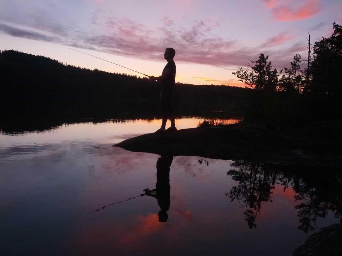 Fiske i Jämtlands sommarnatt när den är som bäst!