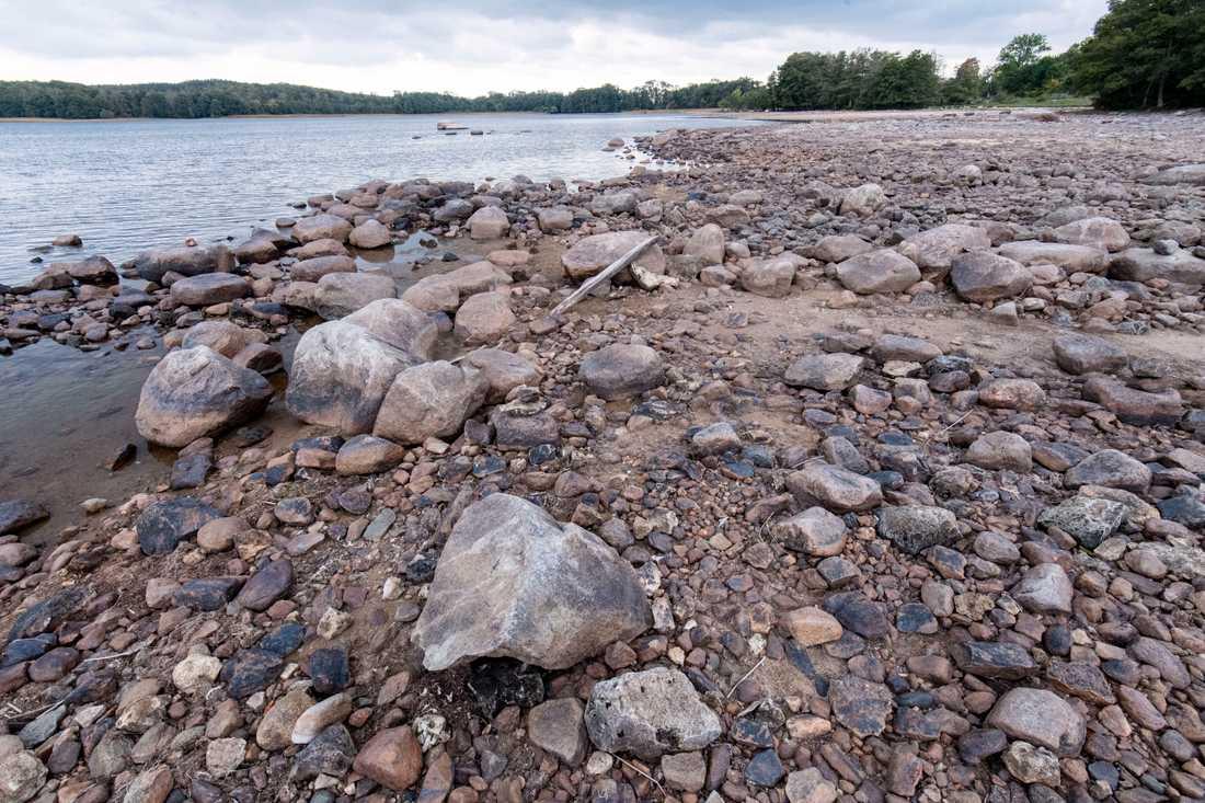 Lågt vatten i skånska Ivösjön i september efter sommarens torka. Arkivbild.