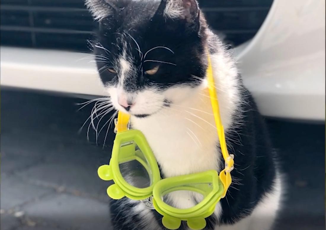 Katten Musse ertappades med ett par simglasögon.