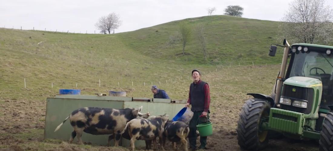Paret Mandelmanns tillsammans med sina grisar.