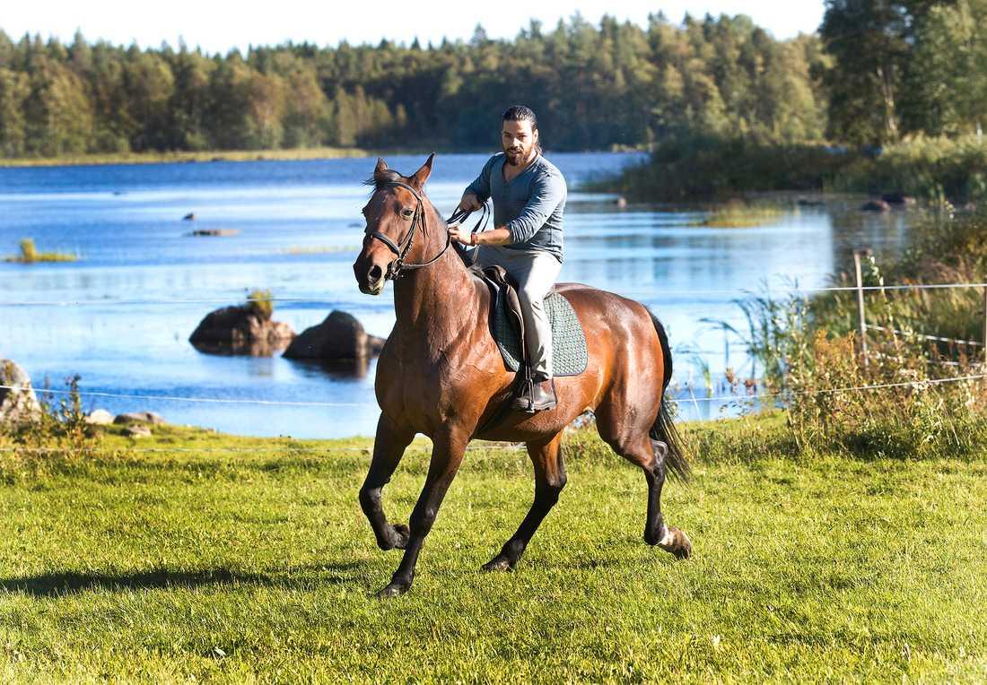 Naeef har väldigt god hand med hästarna.