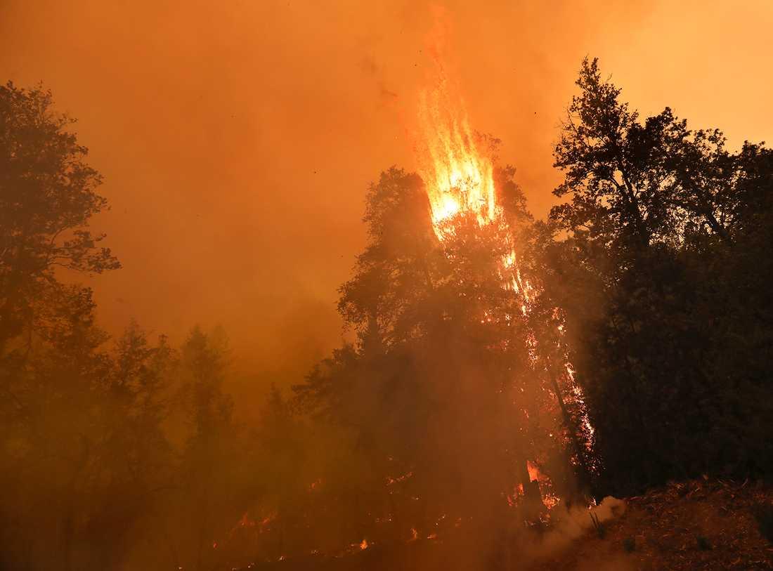 Antalet bränder spås bli fler i år jämfört med rekordåret 2019. Arkivbild.