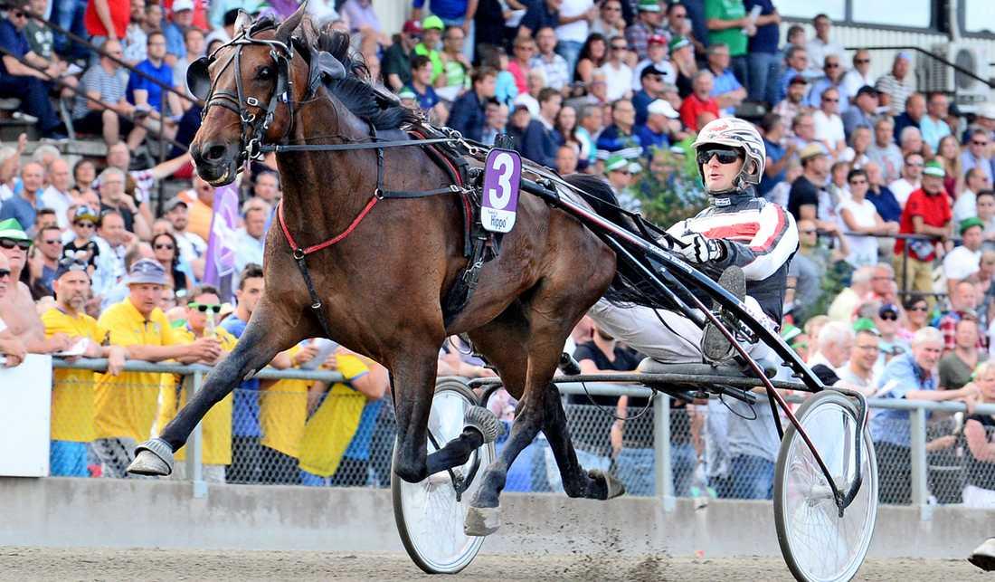 Rambo Rivner är en av hästarna som startar på Bjerke.