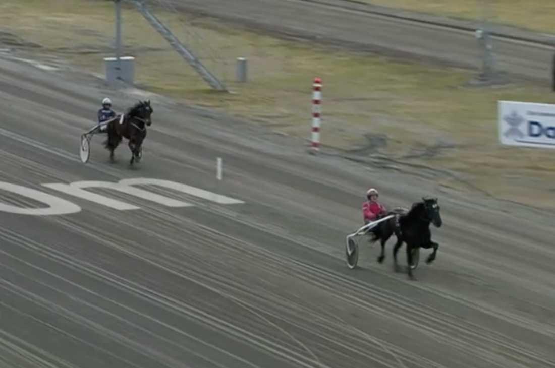 Gunnar Melander och Månlykke A.M. vann V75-4 helt överlägset.
