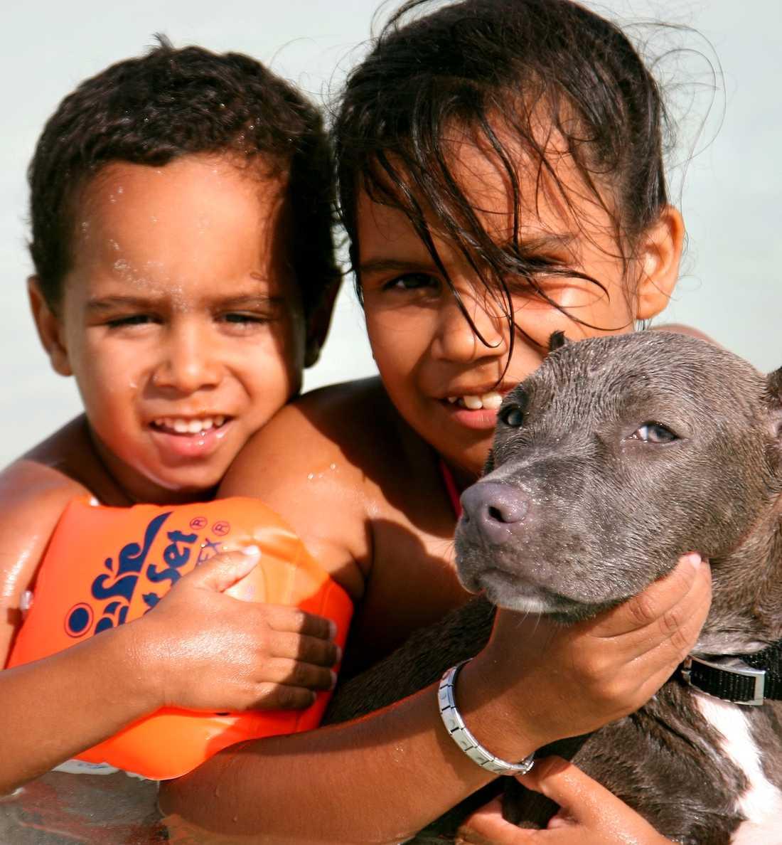 Mer eller mindre frivilligt hundsim på Baby beach.