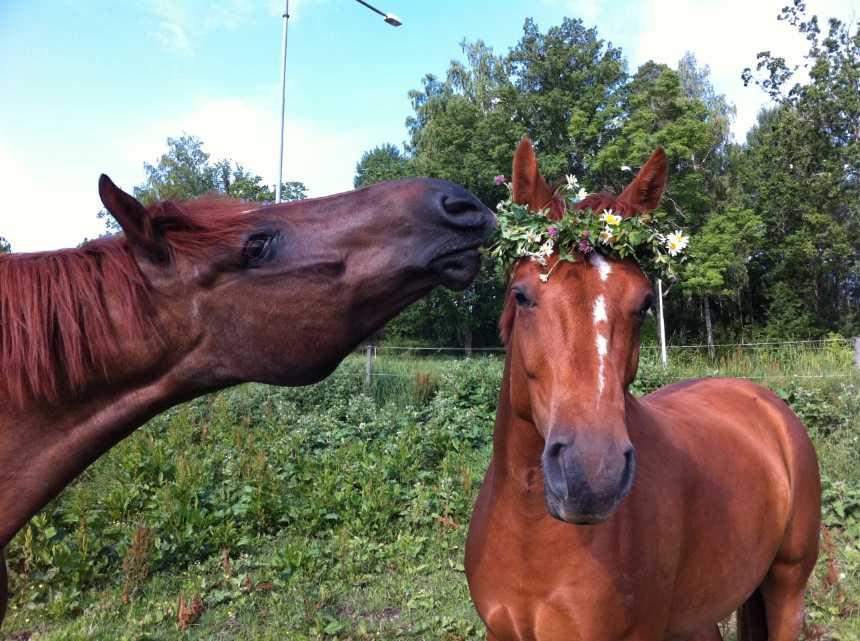 """""""Mina underbara hästar Cool och Alzandro får symbolisera vad midsommar betyder för mig... Äta gott och umgås med mina bästa vänner!"""" skriver Elisabeth Sallermo."""