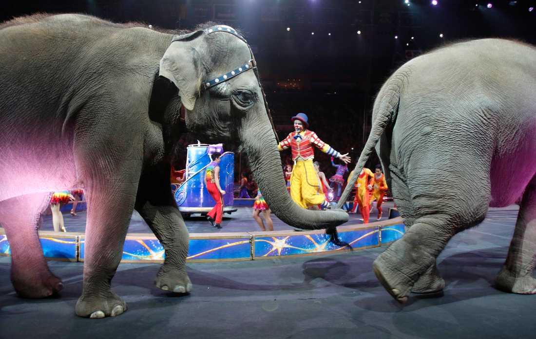 Bland förändringarna finns att elefanter och sjölejon nu läggs till listan av redan tidigare förbjudna djur.