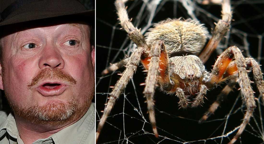 Spindel kan vara boven Djurexperten Jonas Wahlström tror att en spindel kan ha bitit Laila Bagge. OBS! Spindeln på bilden har inget med Laila att göra.