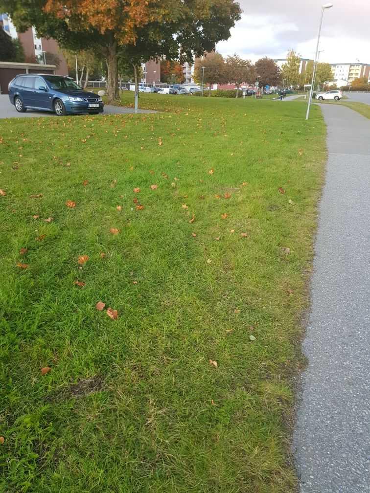 Gräsmattan löper parallellt med gångvägen.