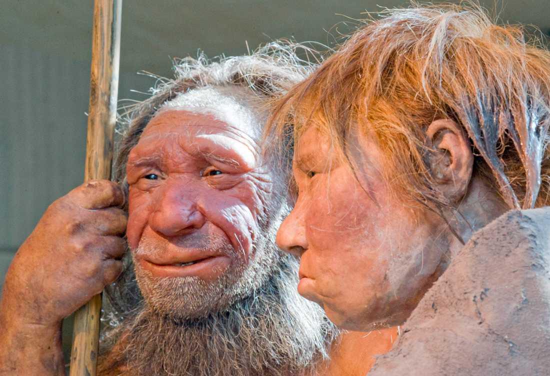 Rekonstruktion av två neandertalare, en man och en kvinna. Hur denisovanerna såg ut är okänt, men troligen var de relativt lika neandertalarna utseendemässigt.