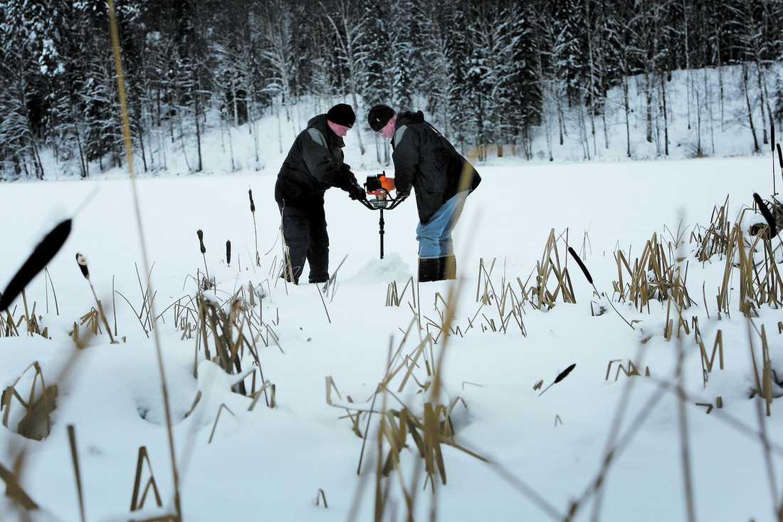 SÖKER Polisen borrar vid vassen i Marnästjärn efter att kriminalhundarna, schäfern Folke och springer spanieln Bubba, markerat att något ligger under isen.