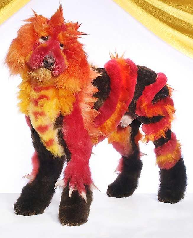 Inför domarna förvandlades hundarna till en drake ...