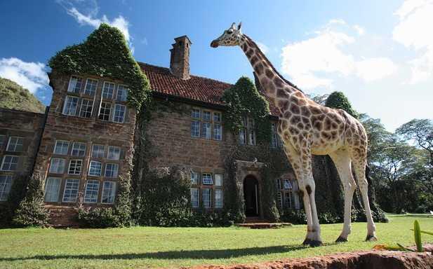 Giraffe Manor, Nairobi, Kenya Vad sägs om att vakna av att en giraff buffar huvudet mot fönstret? Det här vackra stenhotellet utanför Nairobi har stora gräsmattor där ståtliga giraffer spatserar omkring. Då och då sträcker de på sina långa halsar, för att få mat och uppmärksamhet av snälla gäster... Pris: 500 dollar för en natt (cirka 3400 kronor), 14 840 dollar för en månad (cirka 100 000 kronor). Kolla efter billiga flygbiljetter till Kenya här!