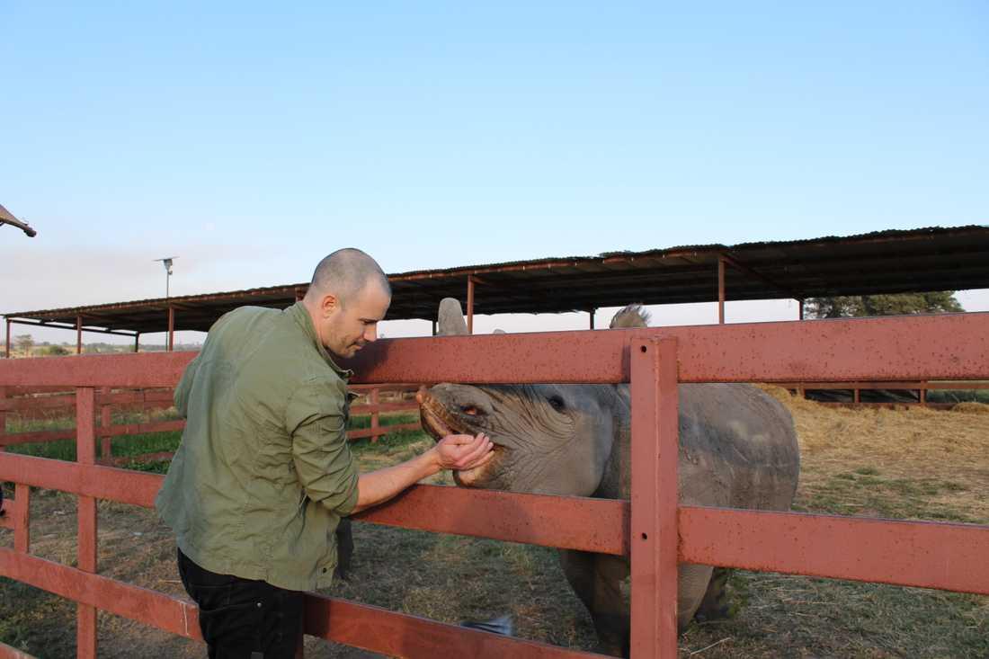 Martin Stenmarck matar noshörningen Tafika.