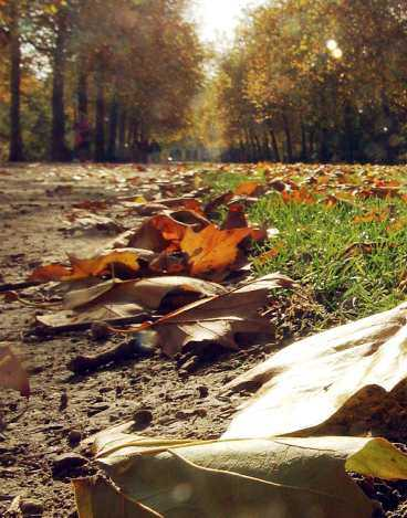 GLIDARE Höstlöven faller inte rakt, utan dansar ner till marken.