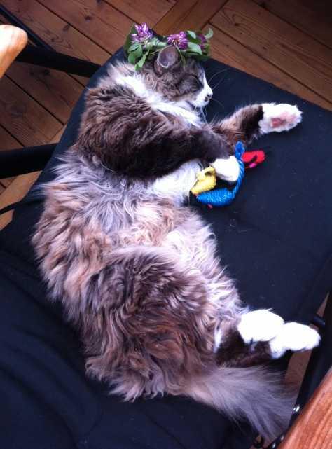 Tröttast på festen Katten Sigge somnade tidigt, avslöjar Anna-Karin Sjöberg.