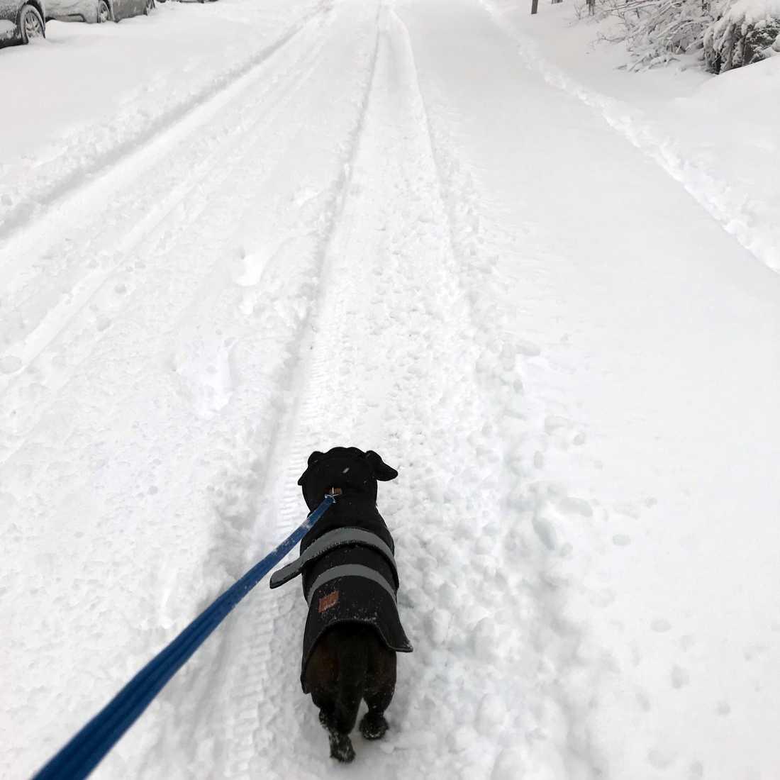 Hundpromenaden i Årsta följer hjulspåren