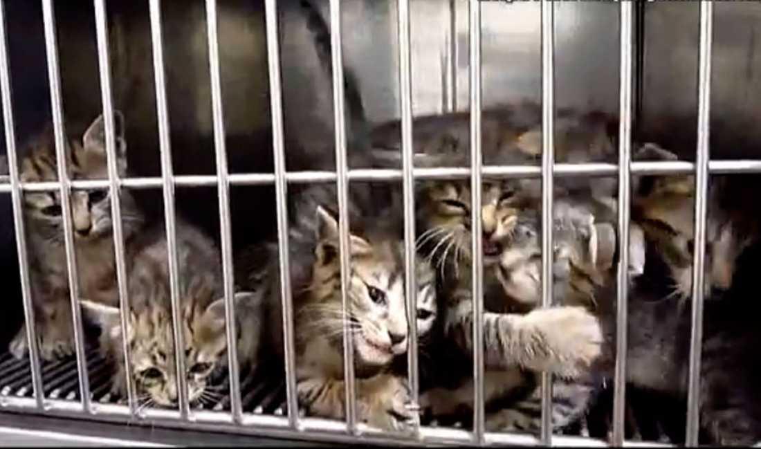 Främst hundar och katter är det som tas in till avlivning av staten.