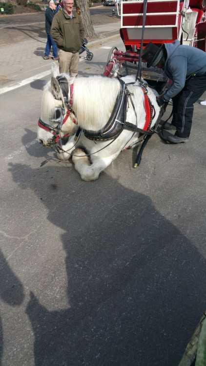 Hästen var tillbaka på jobbet bara dagar efter händelsen.