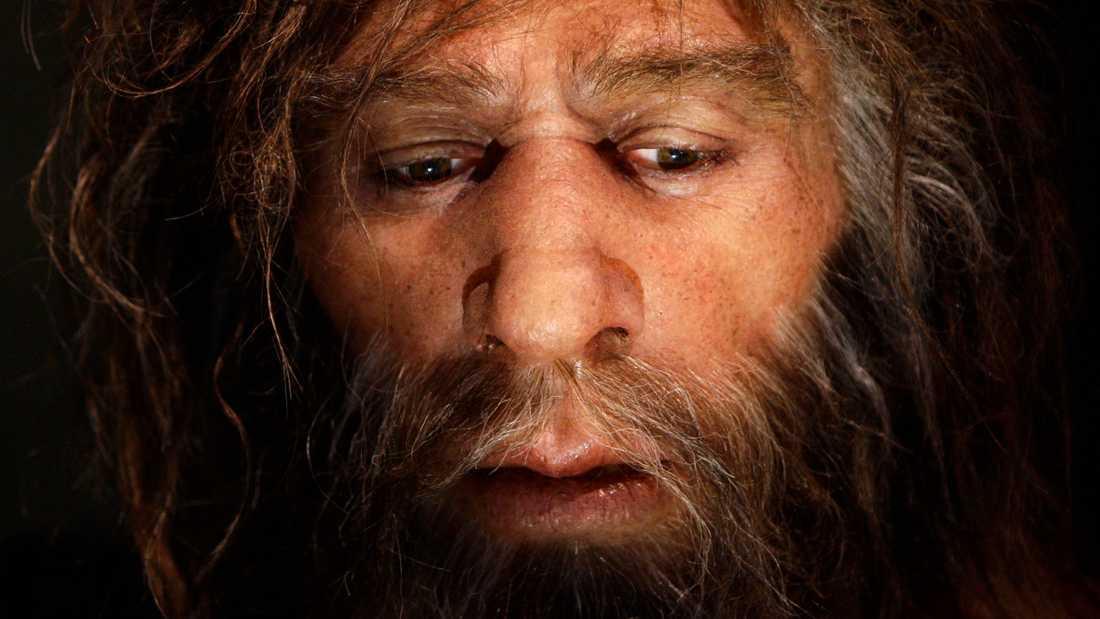 Vad har en 50000 år gammal neandertalare från nuvarande Kroatien med pandemin att göra? En hel del, visar det sig. Bilden visar hur neandertalaren kan ha sett ut.