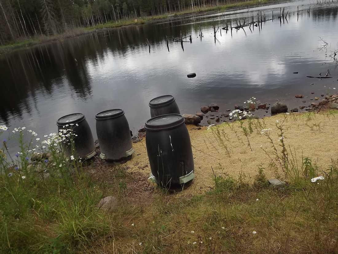 I naturen finns åtskilligt med tomma utfodringstunnor av plast dumpade.
