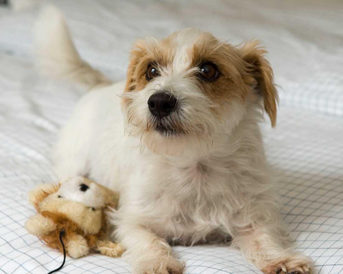 Det blir allt vanligare att ge antidepressiva läkemedel till husdjur.