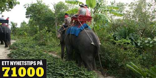 """INNAN BÄRSÄRKAGÅNGEN Gustav och hans svåger John på elefantryggen innan kaoset bröt ut. Båda paren som var med på utflykten har småbarn. """"Hade de följt med hade de inte levt i dag. Det är en fruktansvärd tanke"""", säger Hanna Agnarsson."""