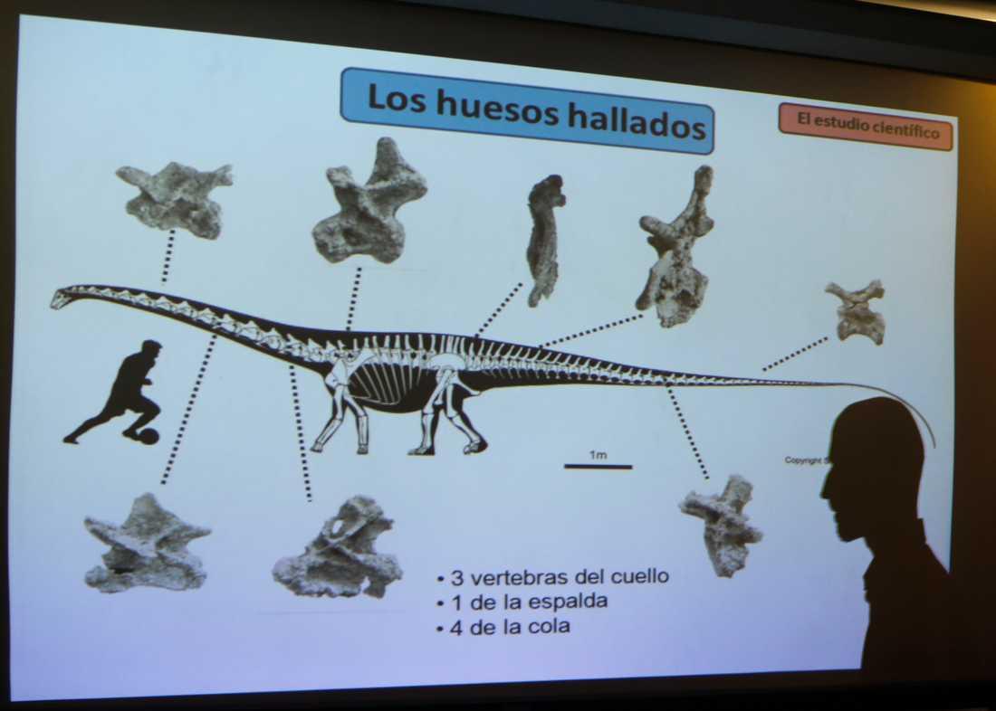 Paleontologen Pablo Gallina visar bilder från upptäckten i Patagoninen, Argentina.