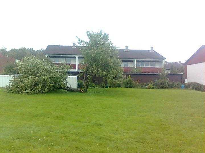 I Köping blåste Katia sönder det här stora trädet.