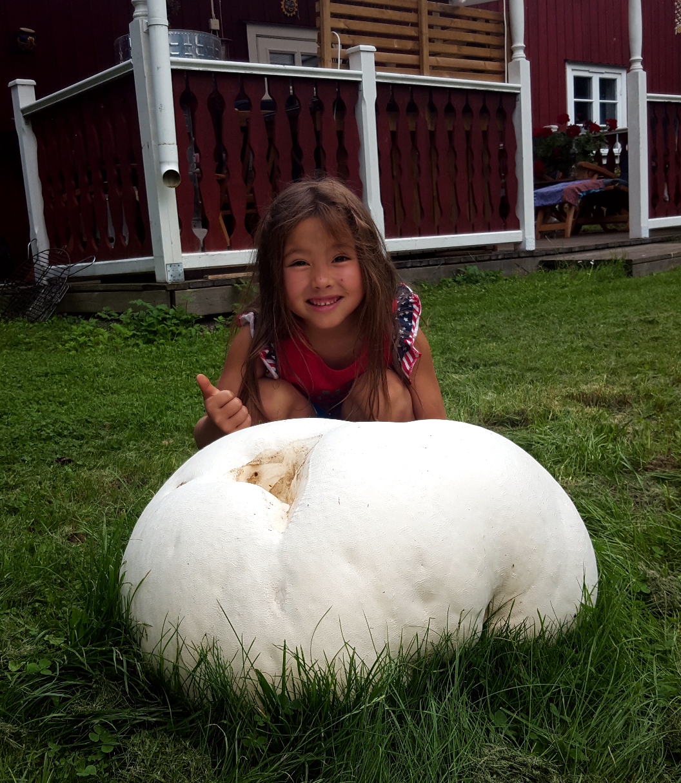 Svampen är nästan större än sexåriga Molly.