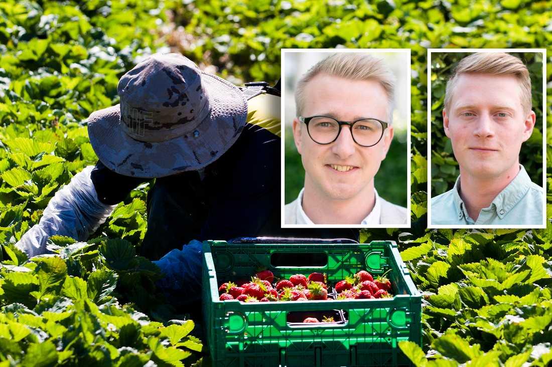 Fredrik Christensson (C) och Magnus Ek (CUF) vill se en satsning på sommarjobb för ungdomar.