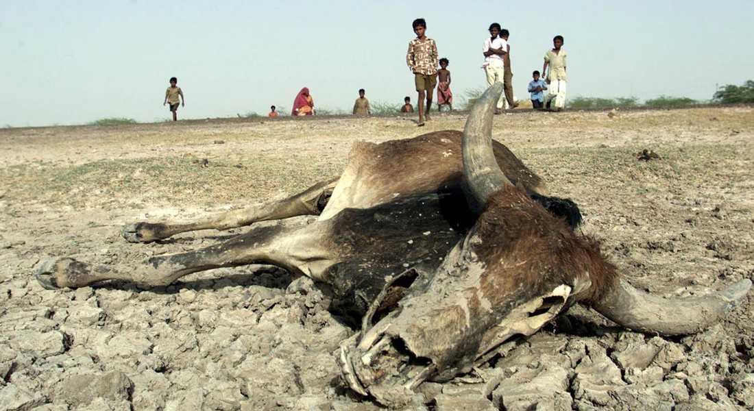 """År 2000 drabbades västra Indien av den svåraste torkan på många decennier. I Kim Stanley Robinsons roman """"The ministry for the future"""" drabbas delstaten Uttar Pradesh år 2025 av något mycket värre."""