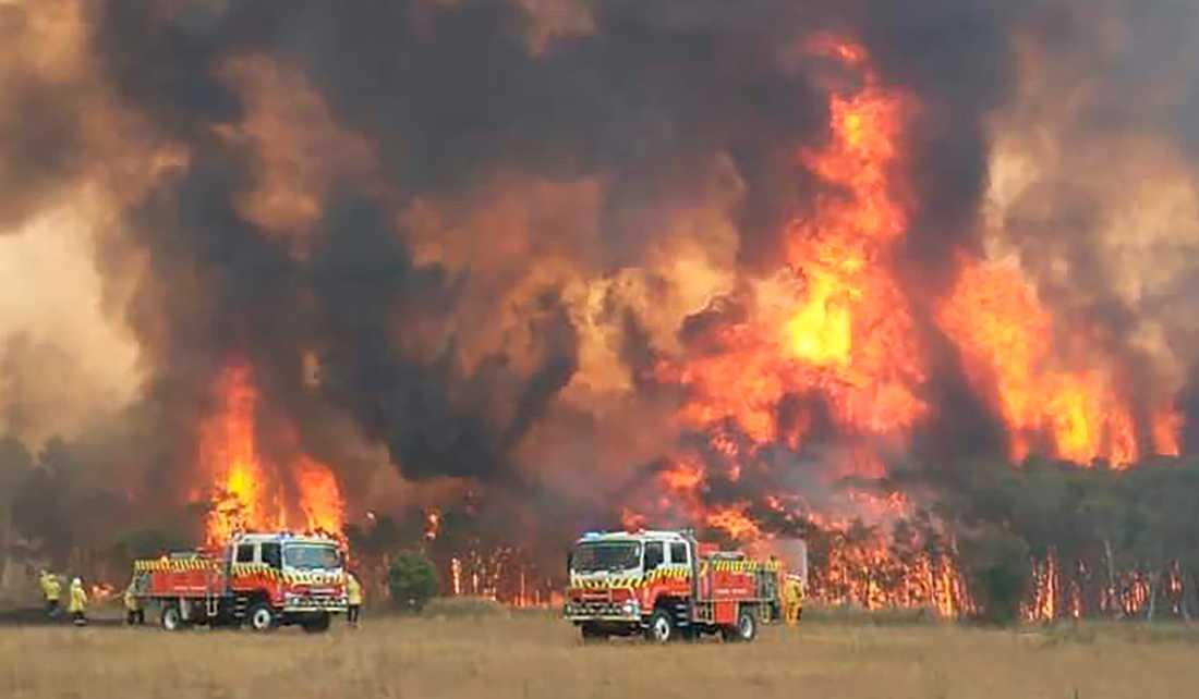 Brandmän försöker bekämpa en brand i Charmhaven, Australien.