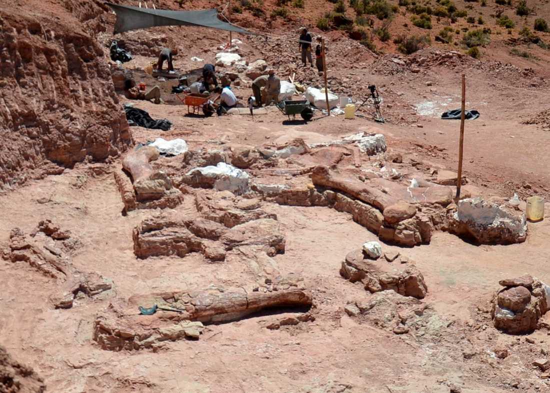 Här är flera delar från utgrävningen i Argentina.