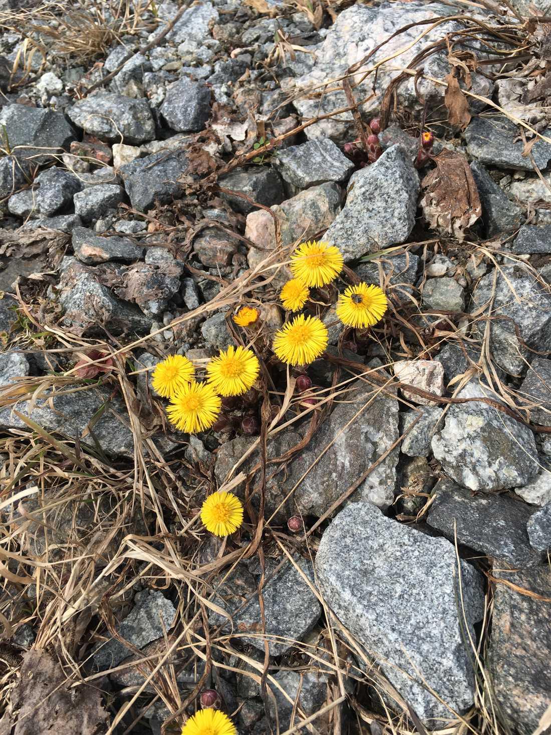 """""""Det är så trevligt att våren är på gång"""", säger läsaren Rolf Ginman."""