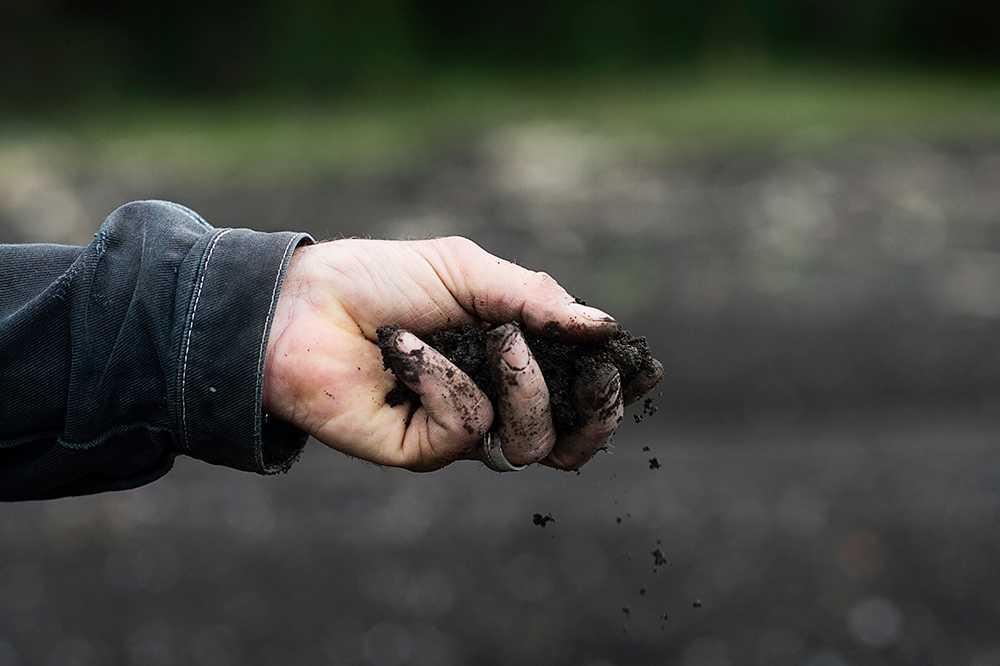 Jorden är den viktigaste ingrediensen när du ska plantera ditt eget trädgårdsland.