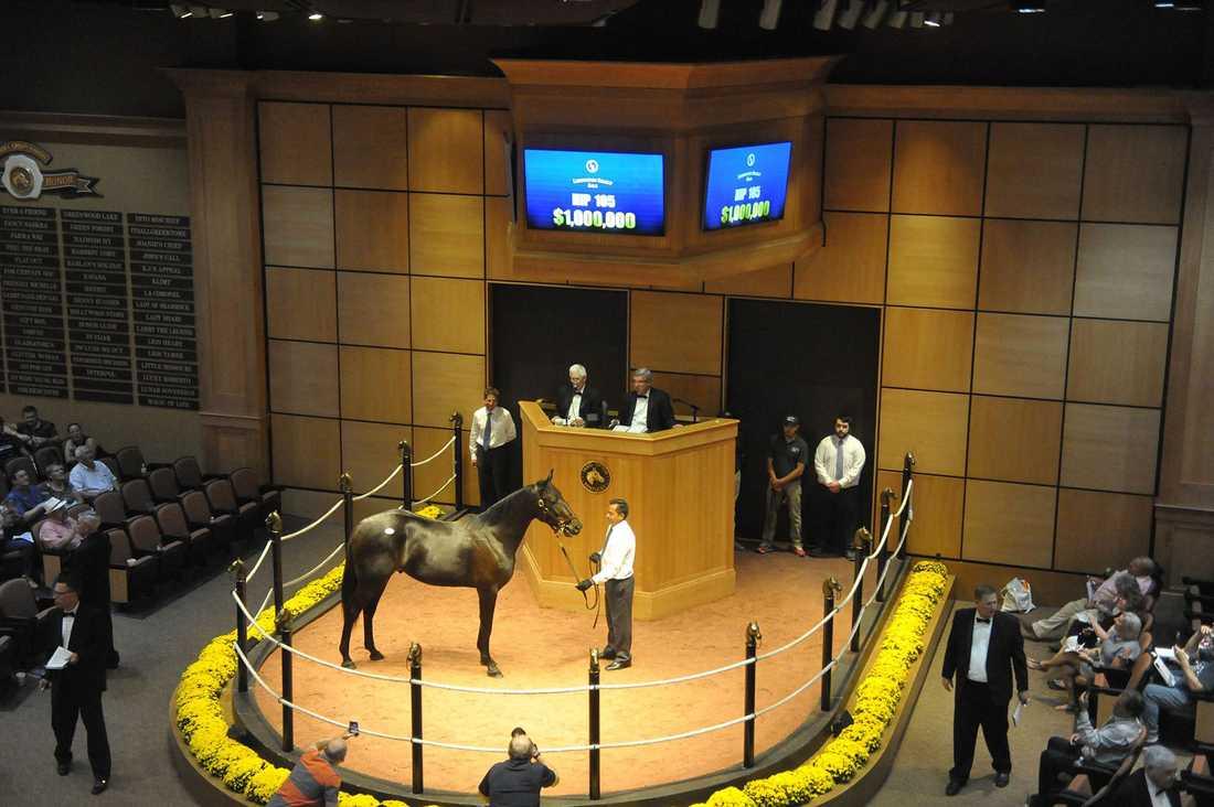 Propulsions helbror, Damien, köptes av Daniel Redén för 1 miljon dollar, eller runt 9,9 miljoner kronor. Planen är att ta hästen till Sverige.