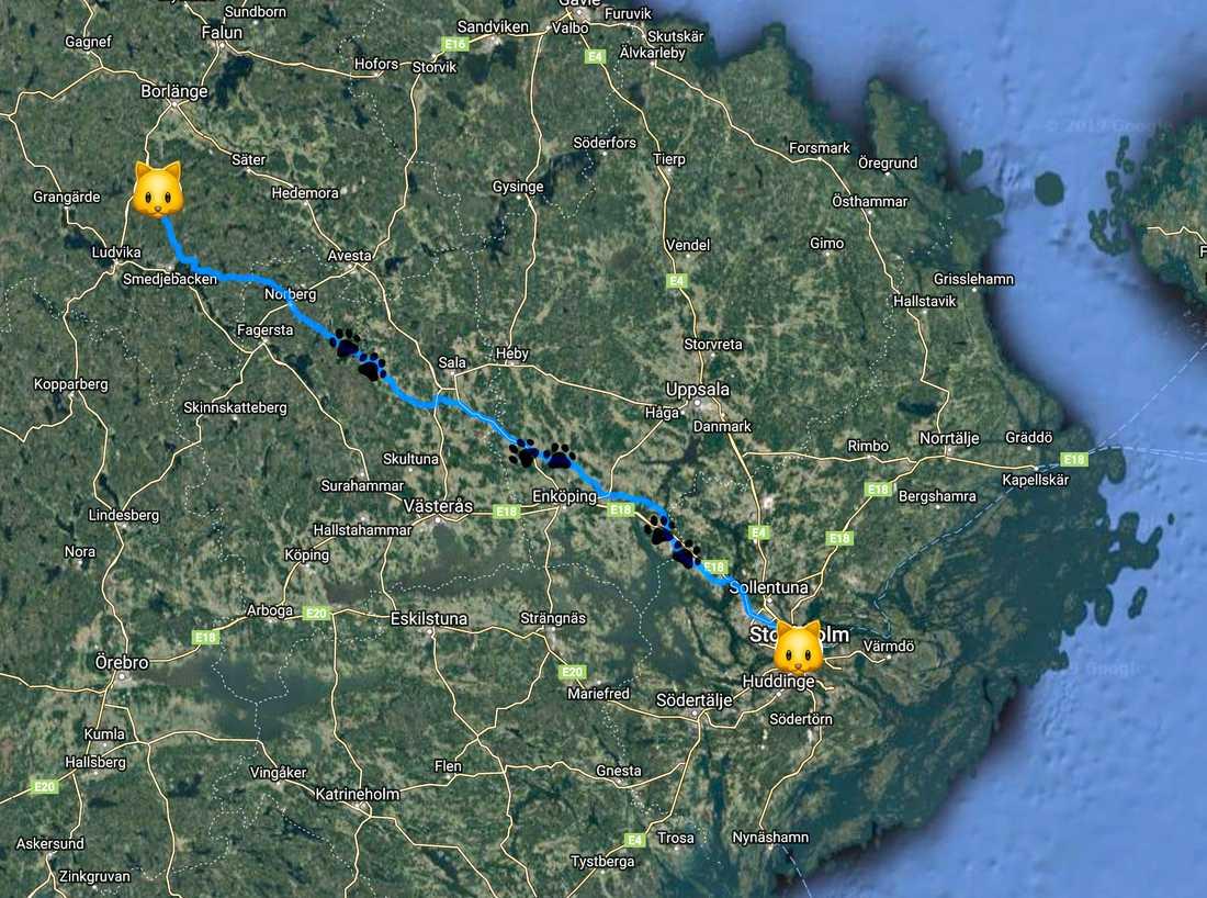 Musses vandringsled var cirka 200 kilometer, från Stockholm till Ulvshyttan utanför Borlänge.