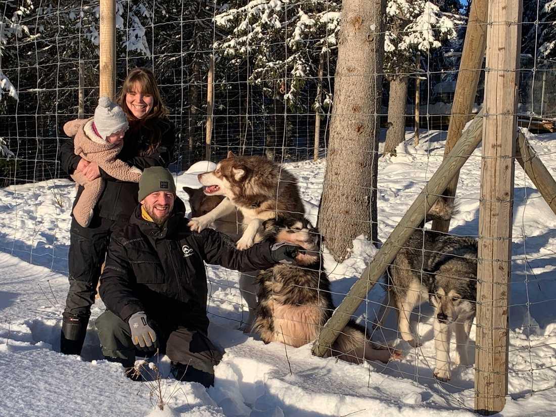 DE ÄR 18 I FAMILJEN. Michelle Ohlsson, 35, Kristofer Ungh, 36, och lilla Fröja, 14 månader bor i en liten röd stuga med vita knutar mitt i ett gnistrande fjällandskap. Här bor också 15 draghundar.