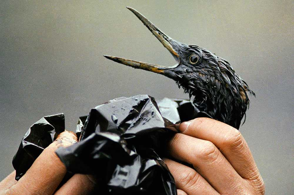 Oljeindustrins framfart drabbar hela världen. Arkivbild från enorma Exxon Valdez-oljeutsläppet i Alaska 1989.