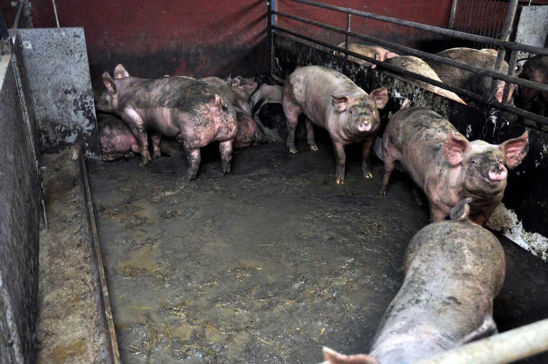 Bilderna visar brister i djurhållningen.