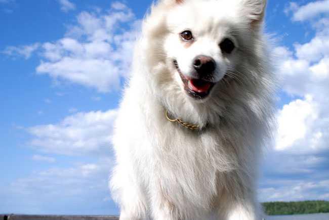 Fritz är 8 år och jobbar som stallhund på en ridskola, där är han älskad av de flesta. Ida Blucher har skickat in fotot.