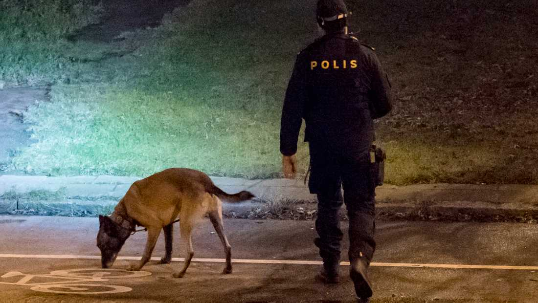 Polisen använder hund för att söka efter kroppsvätskor. Bilden är tagen i ett annat sammanhang.