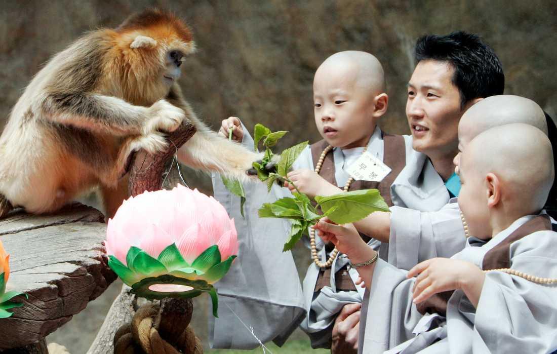Koreas nöjes- och djurpark Everland har en hel egen ap-park.