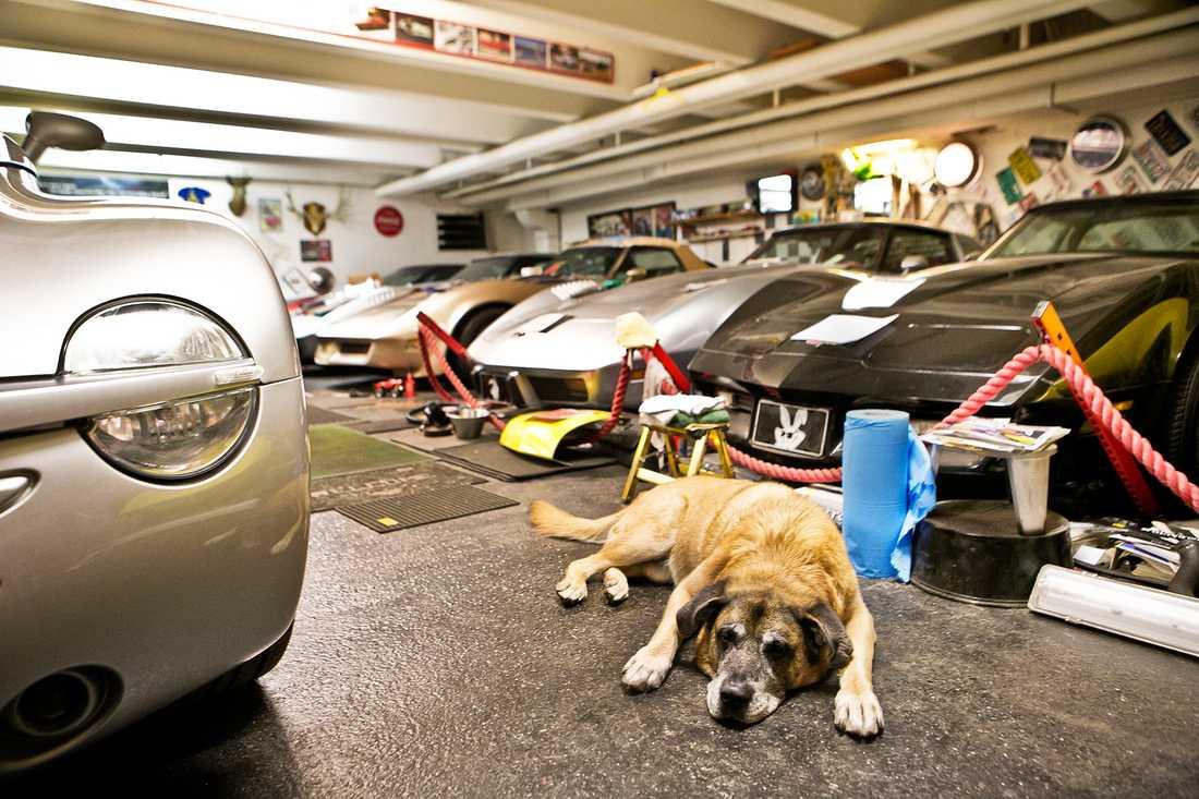 Det ska vara en Lincoln – om hunden Turbo får välja.
