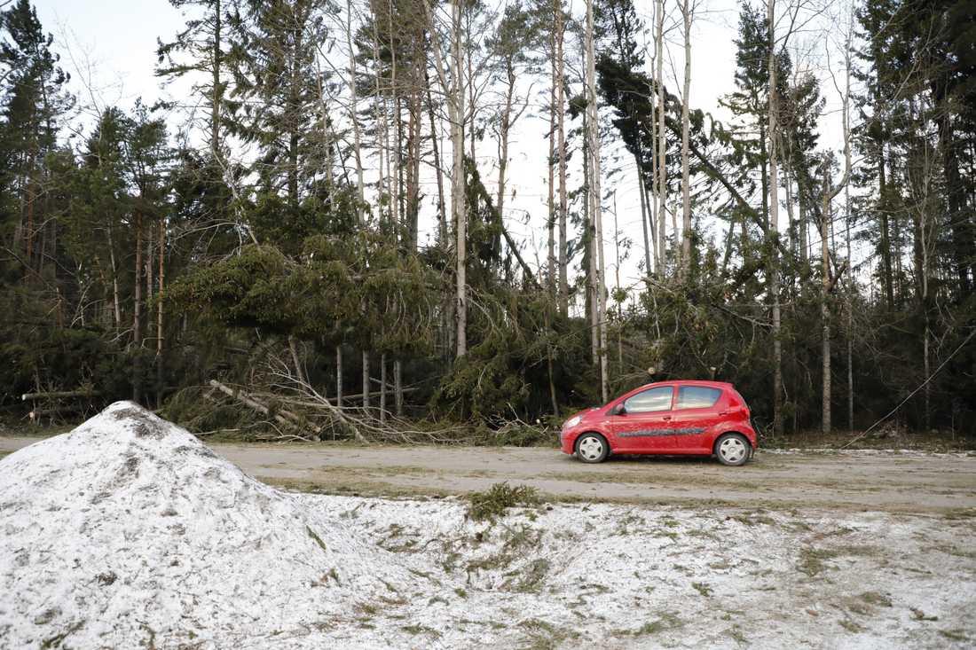 Stormskadad skog vid Finsta i Norrtälje kommun. Arkivbild.