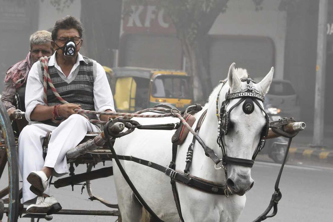 En man med häst och vagn täcker sitt ansikte när han kör genom Dehli.