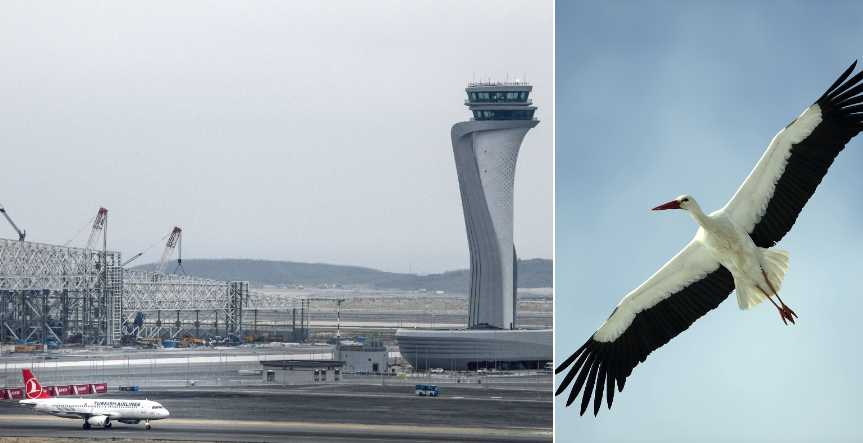 Fåglarna oroar piloter på flygplatsen.