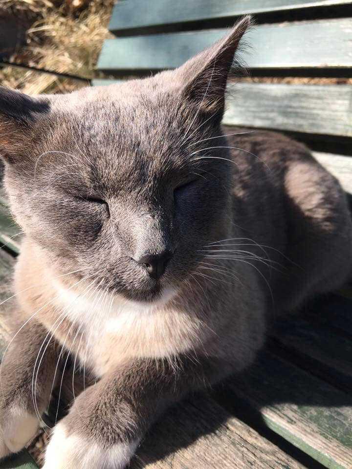 Katten Cato uppges vara kidnappad.